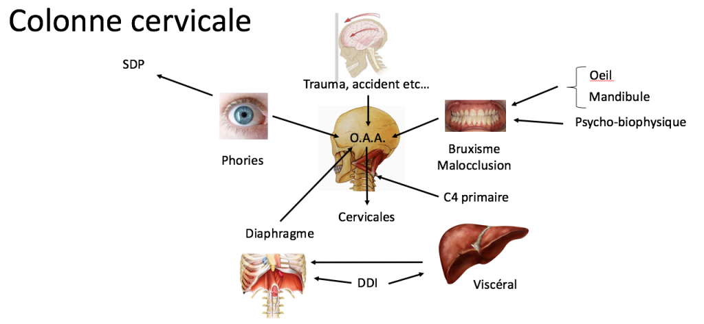 Formation Ostéopathie à Nice | méthode Biomécanique Fonctionnelle Dynamique | Claude Altieri